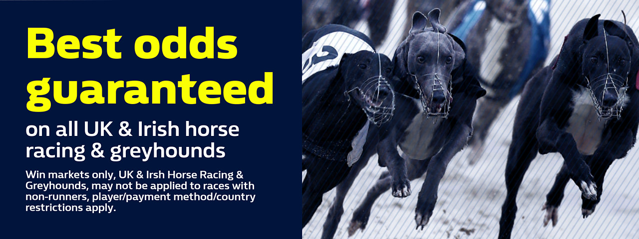 Greyhound racing betting terms for horse ucla vs florida betting line